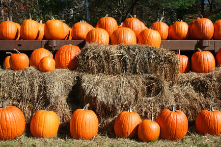 Bright orange pumpkins in rows on hay bales at country market in Maine