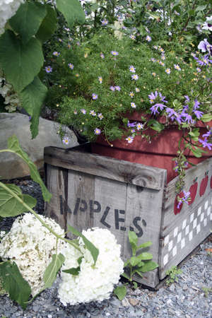 Weathered wooden apple crate surrounded by greens and blooms