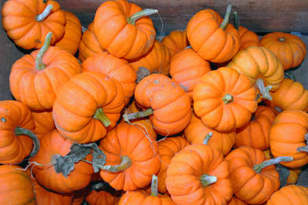 Orange mini jack pumpkins in wooden crate Stock Photo - 8079997