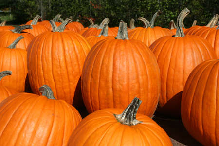 Many bright orange pumpkins at farm stand Stock Photo - 8079967