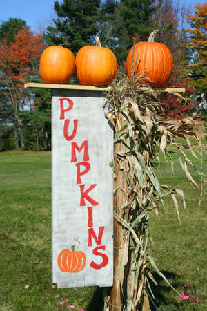 Orange pumpkins on top of pumpkin sign photo