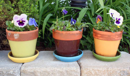 Spring flowers bloom in three colorful garden pots