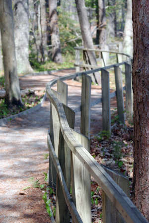 Meandering walkway in forest with curved wooden railing Standard-Bild