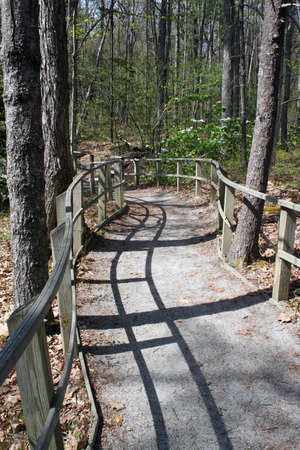 Curving walkway in forest with wooden railings