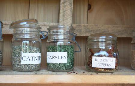 nepeta cataria: Catnip giardino di erbe, prezzemolo, peperoncino rosso in vasetti di mason Archivio Fotografico