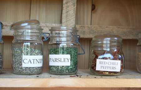 catnip: Garden herbs catnip, parsley, red chili peppers in mason jars