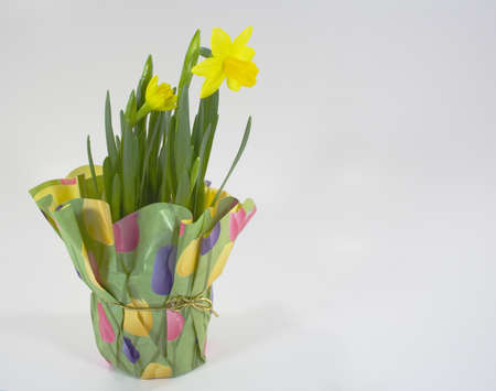 Pot of daffodils wrapped in springtime paper and gold bow