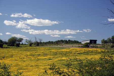 Summertime meadow covered in yellow flowers