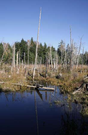 Tranquil Teich mit blauer Himmel Reflexion und grünen Standard-Bild - 9334174
