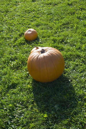 Bright orange pumpkins at farm stand with smaller one and shadow