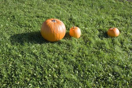 Large bright orange pumpkins at farm stand on green grass