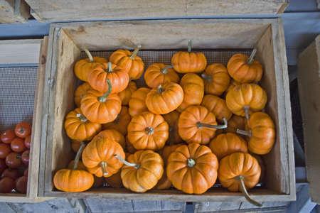 Pumpkin mini jacks in wooden crate at farmer