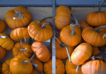 Small bright orange pumpkins at farm stand Standard-Bild