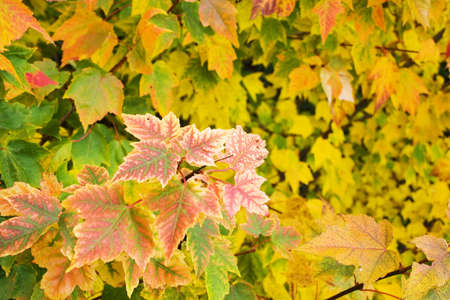 Close up of autumn leaves detail