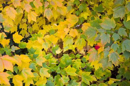 Nahaufnahme der Blätter im Herbst Detail Standard-Bild - 11041837