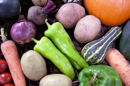 Frisches Gemüse aus für die Anzeige zu verbreiten Standard-Bild - 11121606
