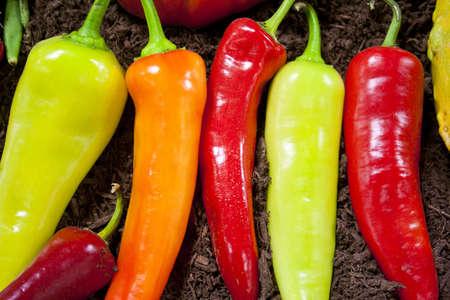 表示のために広がる新鮮な野菜