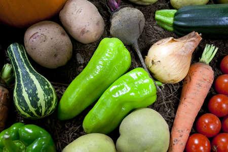 Frisches Gemüse aus für die Anzeige zu verbreiten Standard-Bild - 11121609