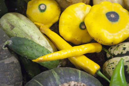 Frisches Gemüse aus zur Anzeige zu verbreiten Standard-Bild - 11121608