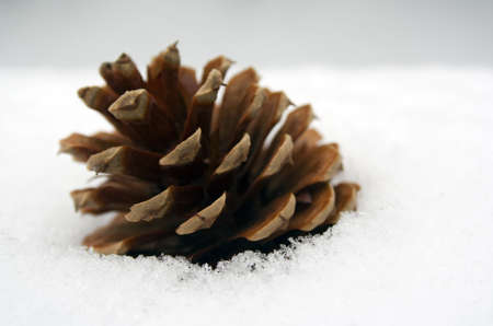 single pine cone set in fresh snow close up detail photo