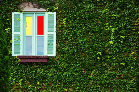 colored window: Colored window covered by fresh green leaves in background