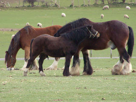 horses in a field. photo