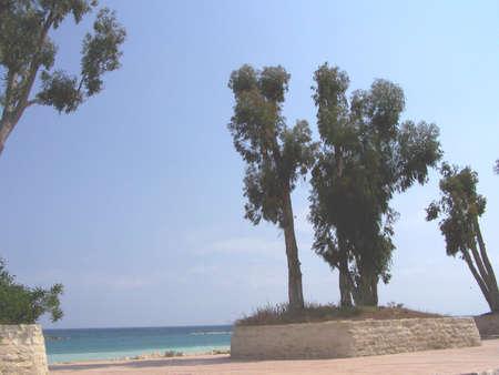 limassol: Trees in limassol bay, cyprus. Stock Photo