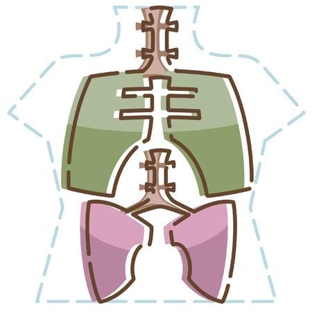 人間の解剖学は、アイコンを設定