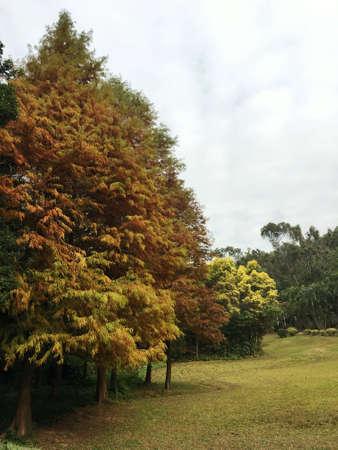 Shenzhen Beacon Hill Park