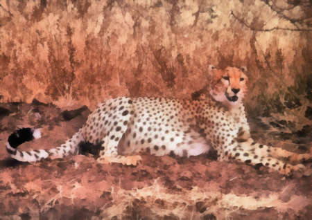 Single cheetah resting.  Can be canvas or paper printed. Can be requested with or without artist�s signature. Stock Photo - 8232917