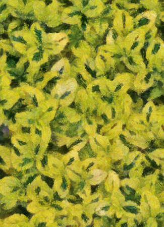 variegated: Variegated Carmel Creeper Fuzzy Background Oil Painting