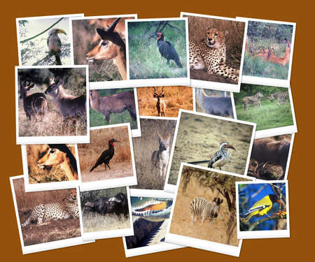 South African Wild Life Picture Collage Stock Photo