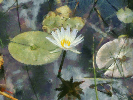 Painting of single Water Lily Flower in pond photo