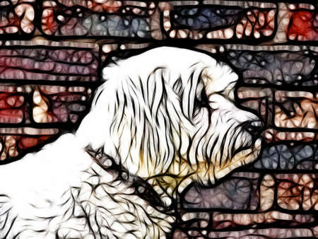 maltese dog:  Abstract Artistic Maltese Dog Drawing with Colorful Background