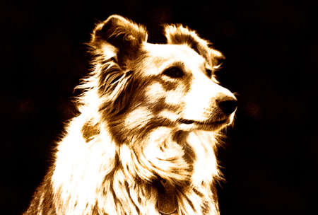 Dog Illustration of Border Collie Listening Tentatively  Stock Photo
