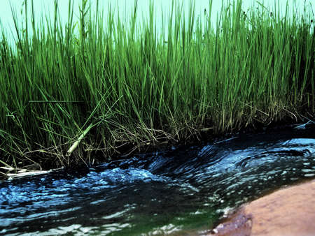 Abstract natural running river water and grass photo