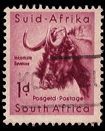 pennie: SOUTH AFRICA - CIRCA 1954  A stamp Printed in South Africa shows a Black Wildebeest, bilingually inscribed, circa 1954