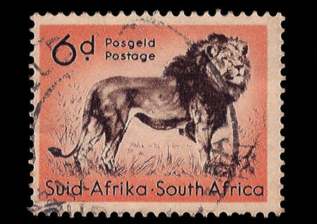 SOUTH AFRICA - CIRCA 1954  A stamp Printed in South Africa shows Lion, bilingually inscribed, circa 1954 Stock Photo - 13178795