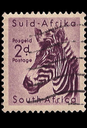 SOUTH AFRICA - CIRCA 1954  A stamp Printed in South Africa shows head of a Mountain Zebra, bilingually inscribed, circa 1954 photo