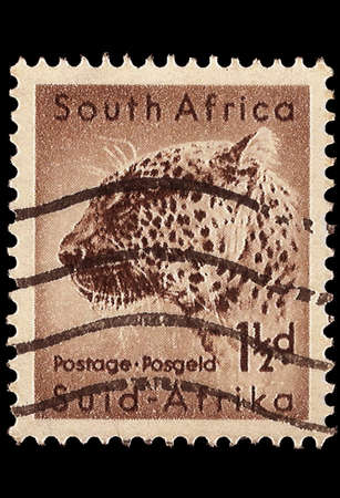 inscribed: SOUTH AFRICA - CIRCA 1954  A stamp Printed in South Africa shows a Leopard, bilingually inscribed, circa 1954