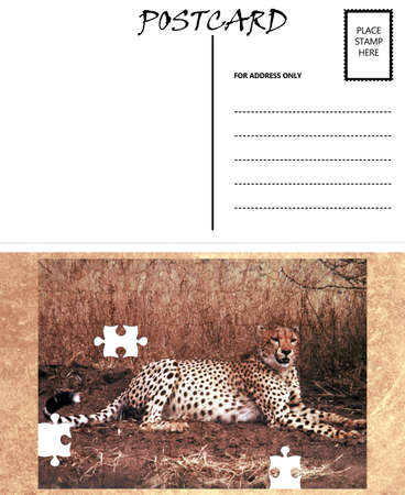 White Empty Postcard Template with Copy Area with Cheetah Puzzle Image photo
