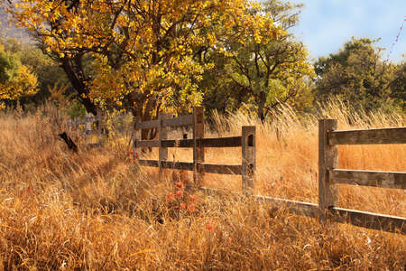 Picture of Old Wooden Farm Fence in Long Yellow Winter Grass Stock Photo - 14196826