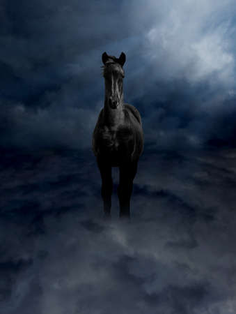 steed: Pegasus Black Steed Standing in Dark Storm Clouds