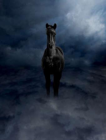 Pegasus Black Steed Standing in Dark Storm Clouds