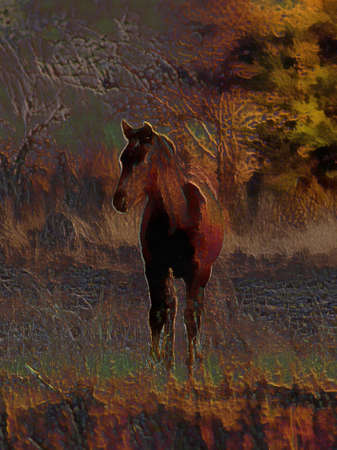 tentative: 3D Illustartion on Canvas of Young Foal Stock Photo