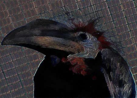 hornbill: 3D Illustration on Canvas of Female Black Casqued Hornbill