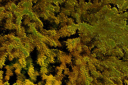 spiky: Unique 3D Image of Yellow Spiky Autumn Brushes Stock Photo