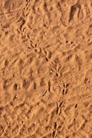 vogelspuren: Kleiner Vogel Tracks on Dry Bushveld Sand