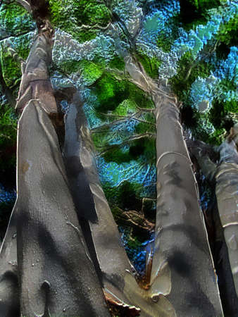 pealing: 3D Bottom up picture of white pealing barked tree