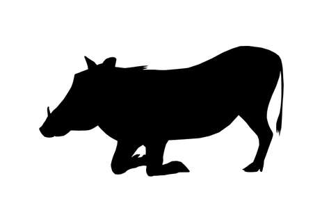 Isolated Silhouette Warthog Busy Eating on Knees Vector